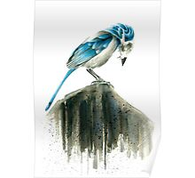 Bird Evolution Poster