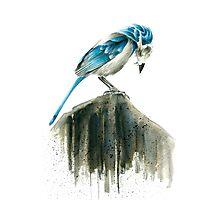 Bird Evolution Photographic Print