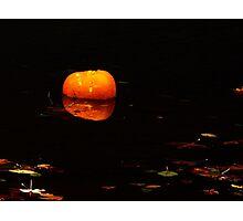 pumpkin afloat Photographic Print