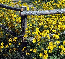 Corraled Wildflowers by © Loree McComb