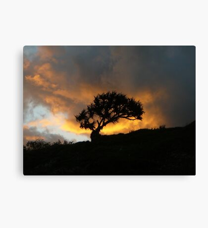 Lone Tree in the Sunset Canvas Print