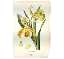 Favourite flowers of garden and greenhouse Edward Step 1896 1897 Volume 4 0059 Lady's Slipper Poster