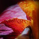 An Iris Moon by Lozzar Flowers & Art
