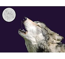 The Jubilation Of The Wolves (V3 Purple) Photographic Print