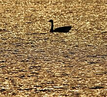 On Golden Pond by Debbie Oppermann