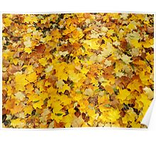 Autumnal Carpet Poster
