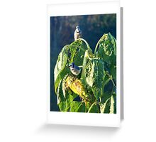 Blue Jay Breakfast Greeting Card
