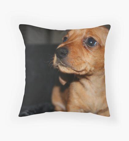 Mini smooth dachshund puppy Throw Pillow