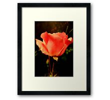 Tenderness ©  Framed Print