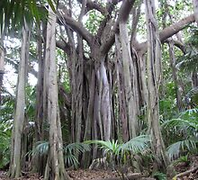 Incredible, but I'm one banyan tree! by DianneLac
