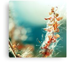 Gently Fly Away Canvas Print