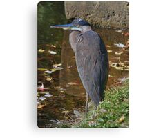 Election Day Heron Canvas Print