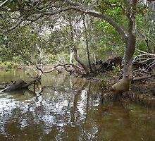 Mud Crab Country , Corindi River by aussiebushstick