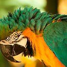 Long Beak! by vasu