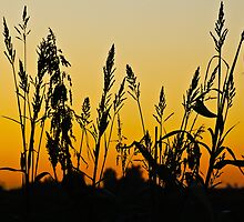 Sunset by MrJohnny68