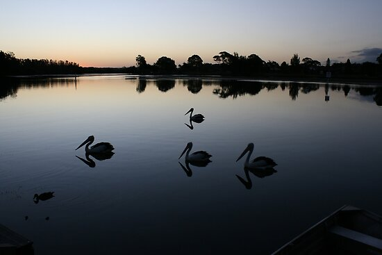 Pelican Parade on Ohmas Bay by aussiebushstick