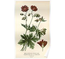 Favourite flowers of garden and greenhouse Edward Step 1896 1897 Volume 1 0168 Broad Petaled Crane's Bill Poster