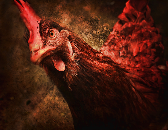 Who ya calling a bird brain? by Edge-of-dreams