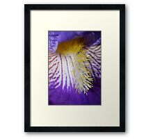 Complimentary colours 3 Framed Print