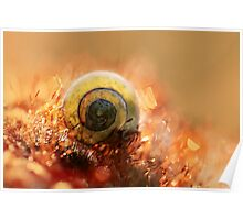 Morning impression with small shell Poster