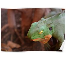 The Coloured Reptile Poster