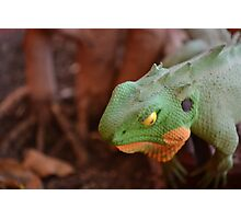The Coloured Reptile Photographic Print