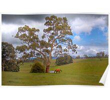 Blakiston - Mattners Rd - Balhanna, Adelaide Hills, South Australia Poster
