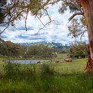 Blakiston Road - Blakiston, Adelaide Hills, South Australia by Mark Richards