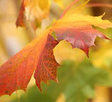 Autumn Leaf by Greybeard