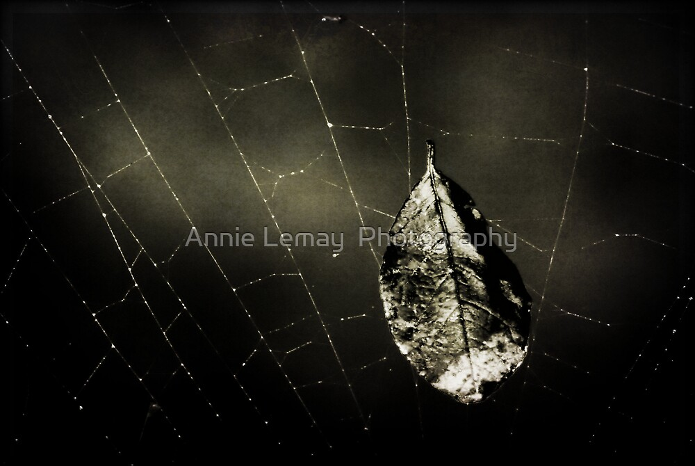 Trapped by Annie Lemay  Photography