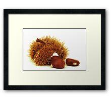 Excellent chestnuts Framed Print