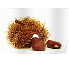Excellent chestnuts Poster