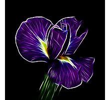 Iris Fractalius Photographic Print