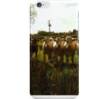 Sunlit Irish Cows iPhone Case/Skin