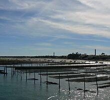 Oyster Beds, Cap Ferret by ppenglish
