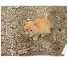 Stray kitten in Crete Poster