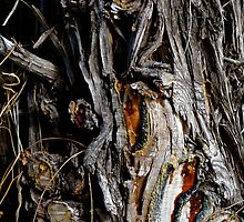 Tree trunk textures by James  Kerr