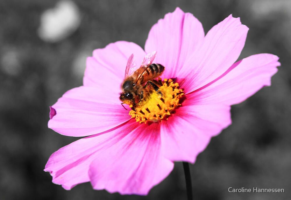 Bumbleebee collecting his pollen by Caroline Hannessen