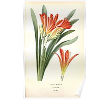 Favourite flowers of garden and greenhouse Edward Step 1896 1897 Volume 4 0127 Clivia Miniata Poster