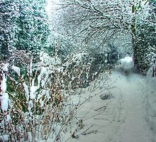 Winter on the Canal - HDR by Colin  Williams Photography