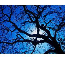 Kruger Blue Photographic Print