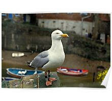 A Herring gull close up. 1980s Poster