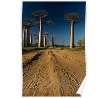 Baobabs Alley I Poster