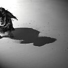 Miniature Dachshund at the Beach by Caroline Hannessen