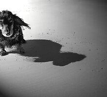 Miniature Dachshund at the Beach by Caroline Hannessen