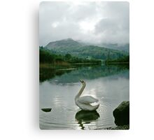 Swan in the Lake District, Cumbria, UK Canvas Print