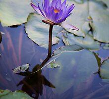 Floating in Beauty by Dale Frazier