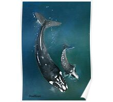 Mum & Baby Southern Right Whales Poster