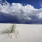 White Sands by MattGranz