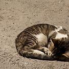 Sweet Cat - Tunisia by Ziad Helmi Zitoun
